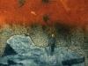 """Red Sky"" (25x26 cm) series of 25 - Price: 2300 SEK"