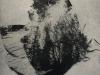 """""""Window through wingstroke"""" (20x27 cm) series of 50 - Price: 2300 SEK"""